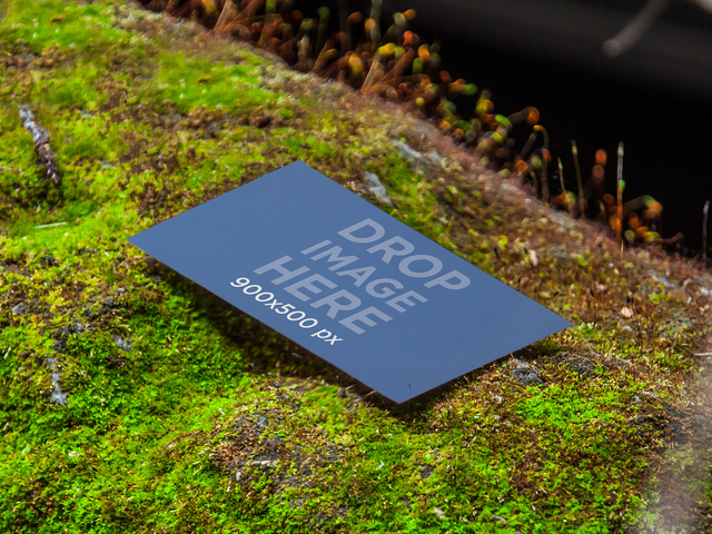 Business Card In The Nature