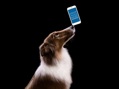 Collie Dog Balancing a White iPhone 7 on his Nose Over a Black Background Mockup a12951wide
