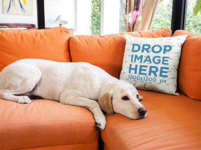 Pillow Mockup on an Orange Sofa Near a Labrador Dog a14927